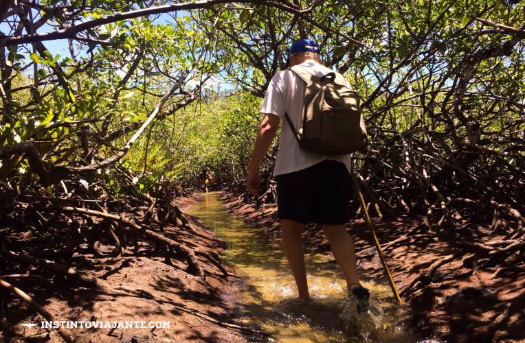 mangue vermelho jeribucaçu