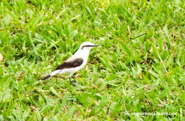 birdwatching aldeia velha rj