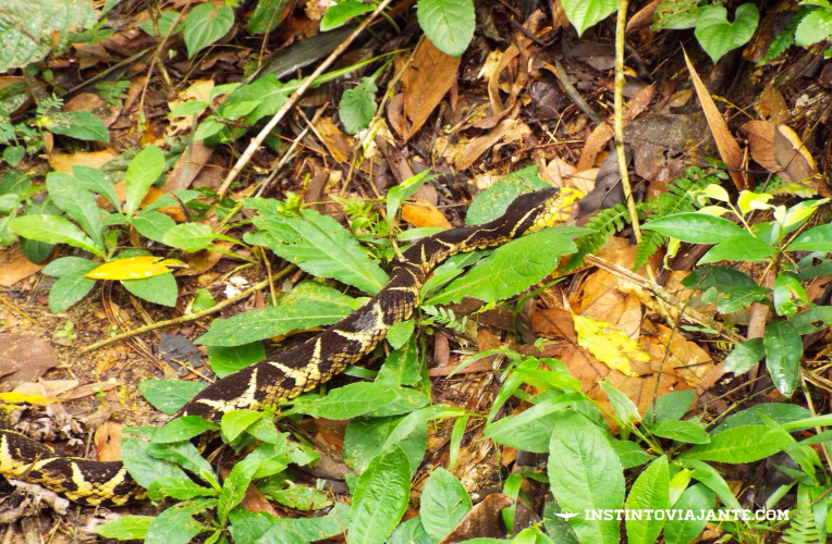 Cobra no meio da trilha para o Peito do Pombo