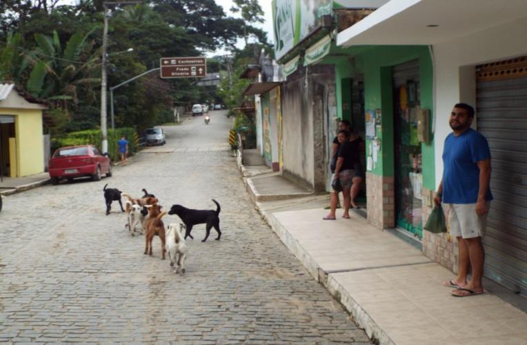 Cachorrada no centro de Sana-RJ