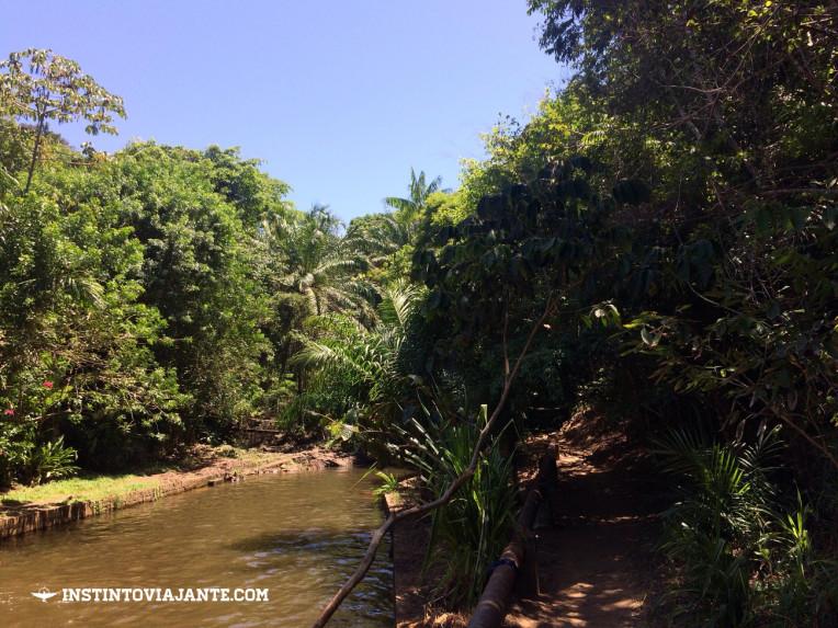 Começo da trilha da Prainha de Itacaré, próximo da praia da Ribeira.
