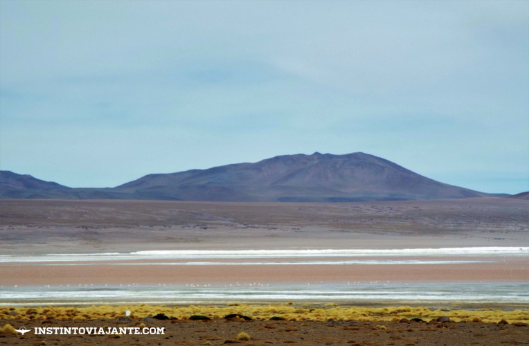 laguna colorada salar de uyuni bolivia