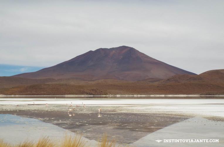 flamingos laguna Chiarkota Ramaditas deserto de sal bolivia