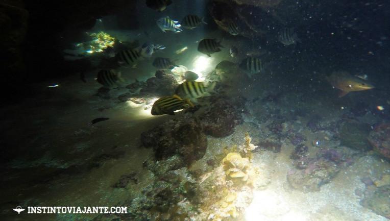 Cardume de peixes durante nosso mergulho em Maraú.