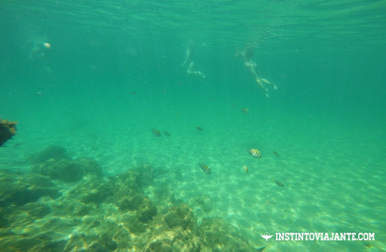 Peixes durante o mergulho em Taipu de Fora, Maraú, Bahia