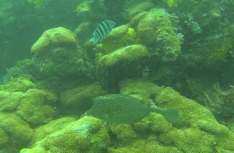 Mergulho nas águas claras de Arraial do Cabo