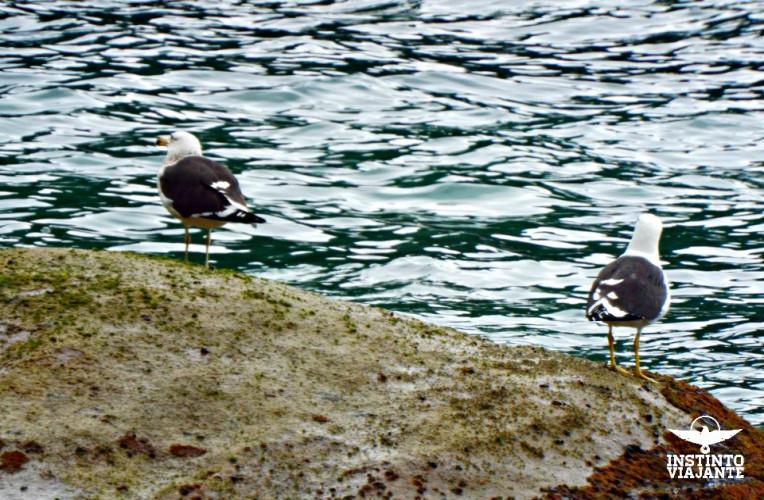 Gaivotas na praia de Ponta Negra, Paraty-RJ.