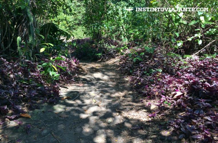 Trilha depois do mirante de Itacoatiara (terceiro mirante) - plantas roxas adornando o caminho que fica um pouco mais fechado.