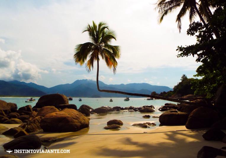 Famoso coqueiro deitado de Aventureiro, Ilha Grande/RJ