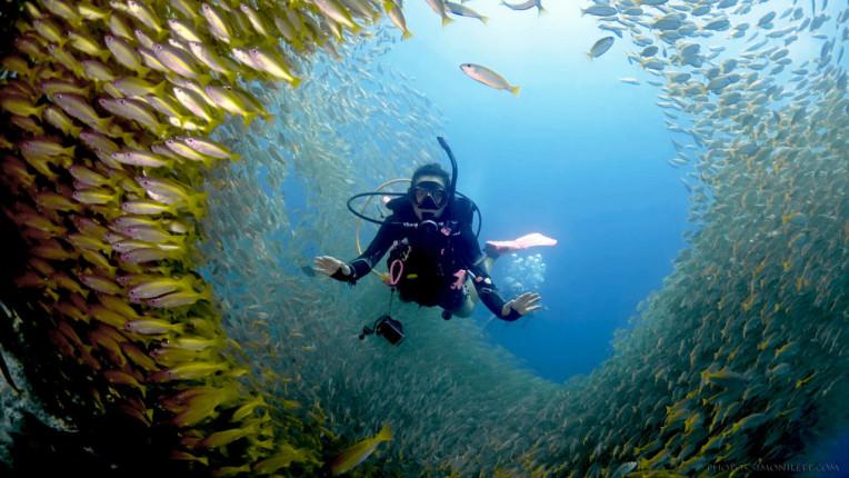 Melhores coisas para fazer na Tailandia - Mergulho em Phi Phi Island