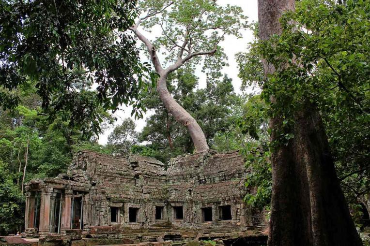 Melhores coisas para fazer no Camboja - Templo Ta Prohm