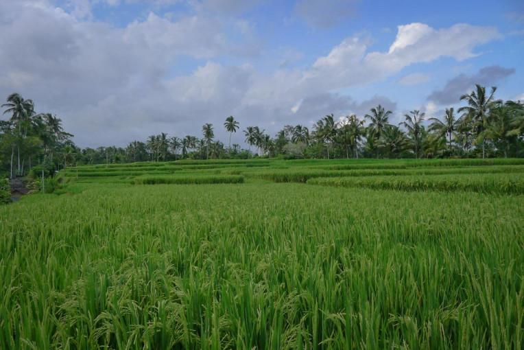Melhores Lugares Visitar Turismo Indonésia - Ubud