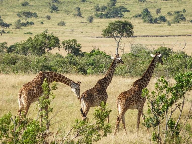 África do Sul - Safári em Joanesburgo