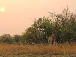 África do Sul - Safári em Joanesburgo - Pilanesberg Park