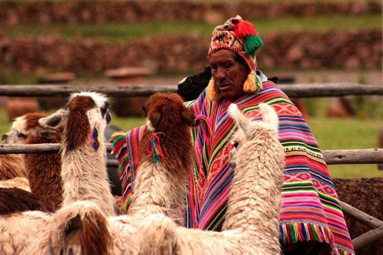 Dicas de viagem Peru - Lhamas e Alpacas no Peru