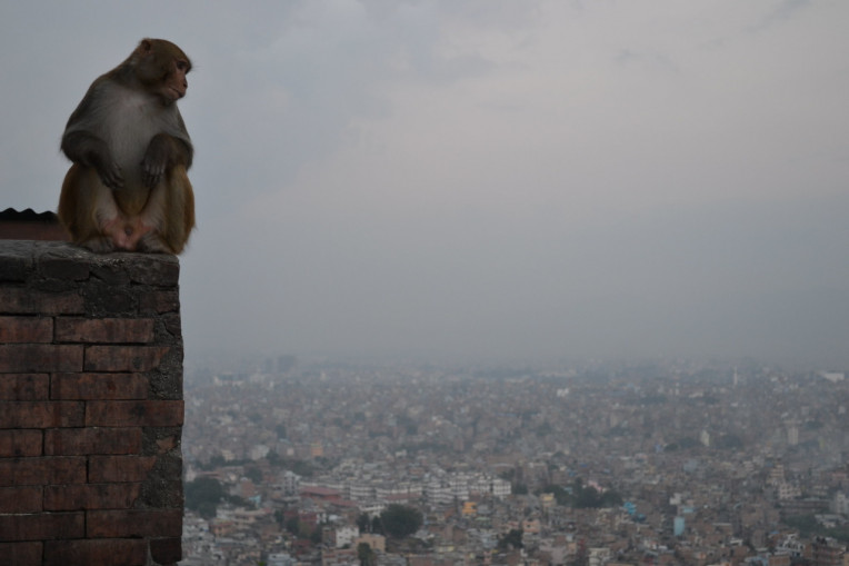 Kathmandu Nepal - Templo dos Macacos