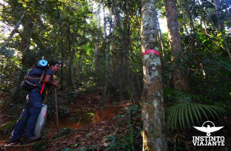 Fitas nas árvores indicam o caminho correto na trilha Ponta Negra Martim de Sá