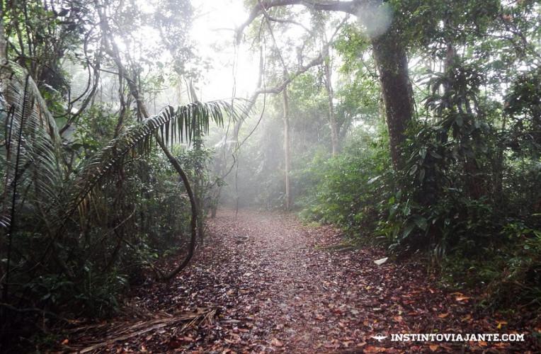 Fim da neblina, na Trilha T8 (Araçatiba - Provetá)