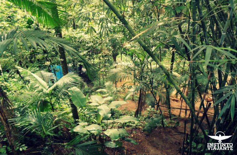 O lindo verde do Oasis Mundo