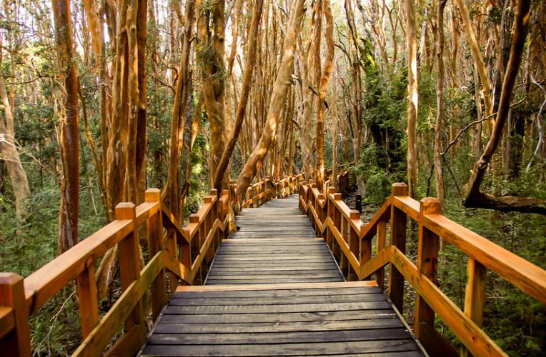 Bosque de Arrayanes, Parque Nacional Los Arrayanes, Villa la Angostura, Argentina