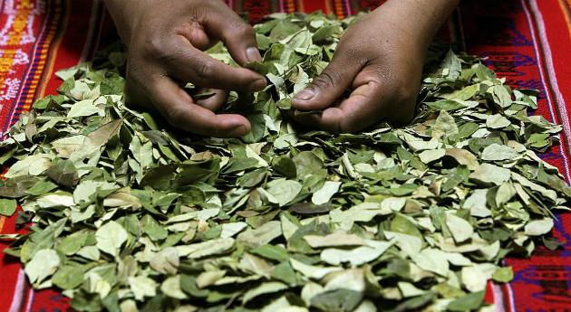 Folhas de coca para previnir soroche