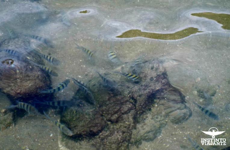 Peixes na Piscina Natural do Cachadaço, Trindade