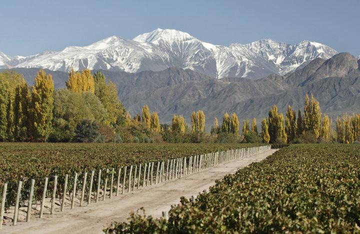 Bodega Terraza de los Andes, em Mendoza, Argentina. Foto: miraargentina.com